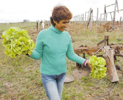 20070912050238-produccion-de-lechugas-en-ocupacion-de-tierras-en-bella-union-uruguay.jpg